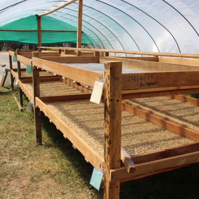 収穫そして生産処理