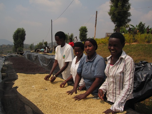 ルワンダ バフコーヒー